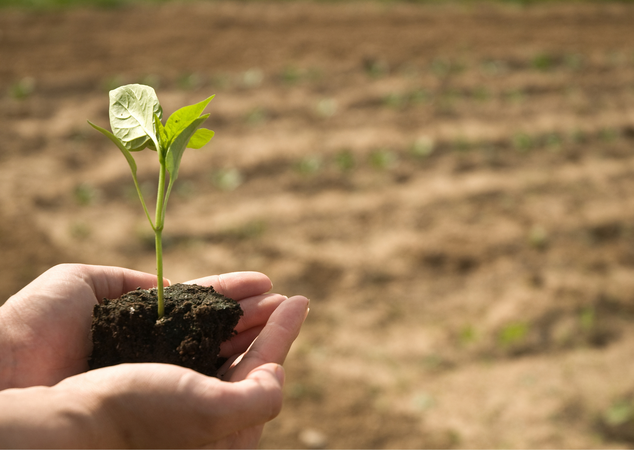 Sostenibilidad Alimentaria y Ambiental: Un reto de los Objetivos de Desarrollo Sostenible (ODS) 2030